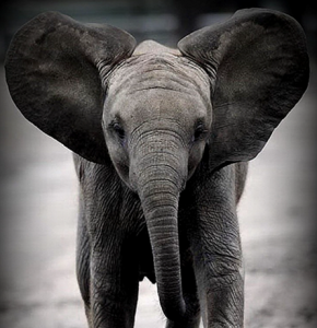 Corridor Eléphant